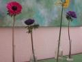 flowerbauer Yoga und Natur