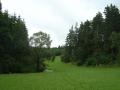 Wiese_Wald